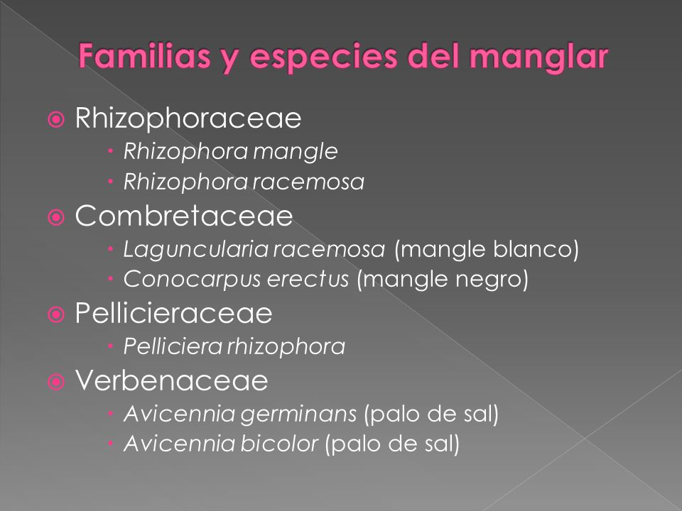 Rhizophoraceae Rhizophora mangle Rhizophora racemosa Combretaceae Laguncularia racemosa (mangle blanco) Conocarpus erectus (mangle negro) Pellicierace