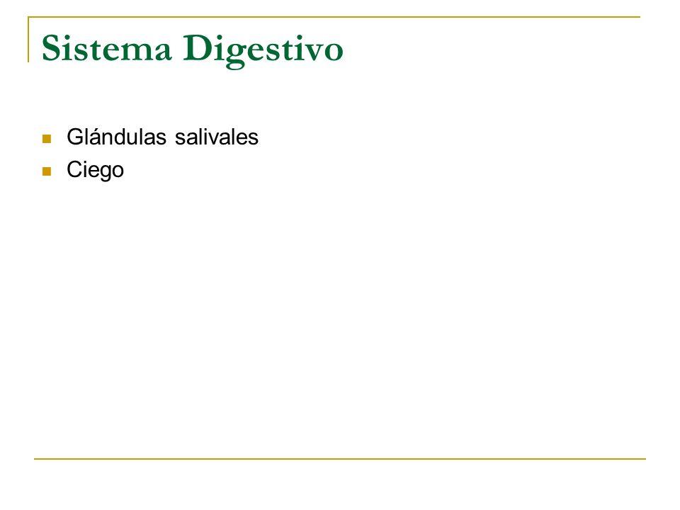 Sistema Digestivo Glándulas salivales Ciego