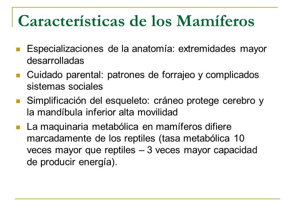 Características de los Mamíferos Especializaciones de la anatomía: extremidades mayor desarrolladas Cuidado parental: patrones de forrajeo y complicad