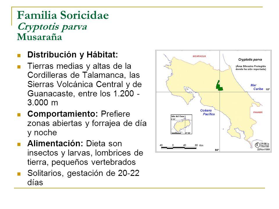 Familia Soricidae Cryptotis parva Musaraña Distribución y Hábitat: Tierras medias y altas de la Cordilleras de Talamanca, las Sierras Volcánica Centra