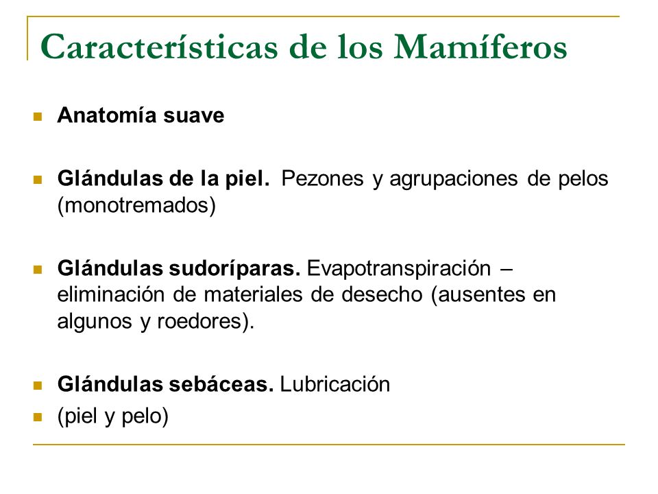 Orden Chiroptera Orden de los murciélagos Únicos mamíferos que vuelan.