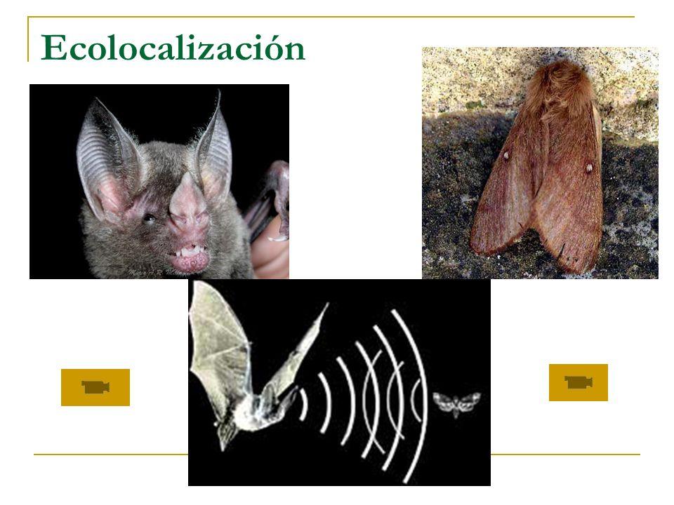 Ecolocalización