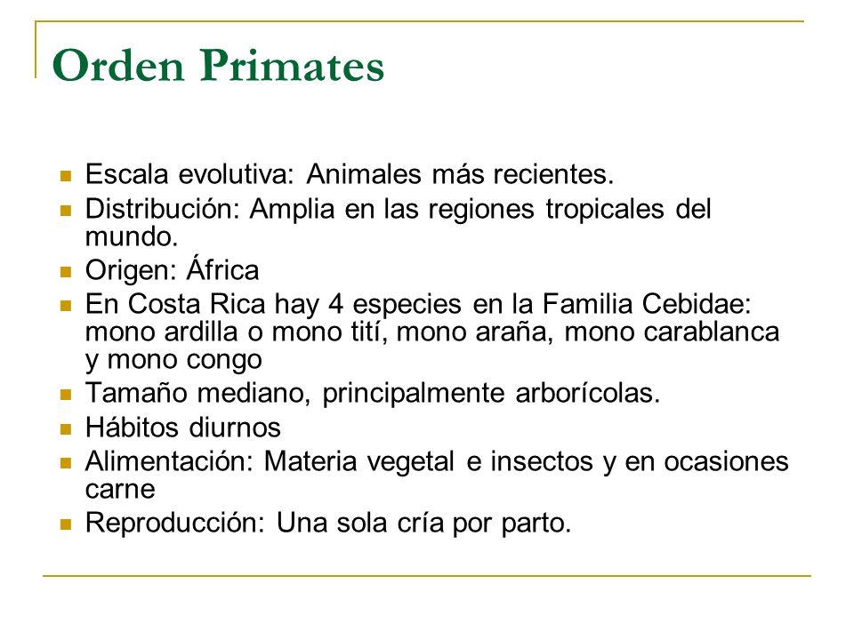 Orden Primates Escala evolutiva: Animales más recientes. Distribución: Amplia en las regiones tropicales del mundo. Origen: África En Costa Rica hay 4