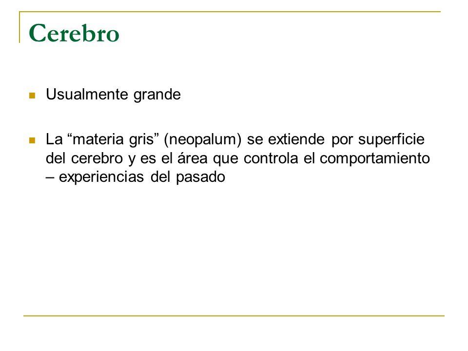 Familia Didelphidae Didelphis virginiana Zorro Pelón Norteño Gestación: 12-13 días.
