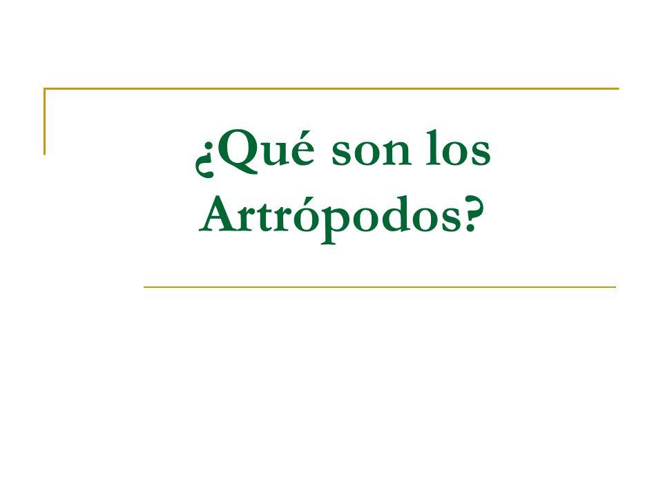 ¿Qué son los Artrópodos?