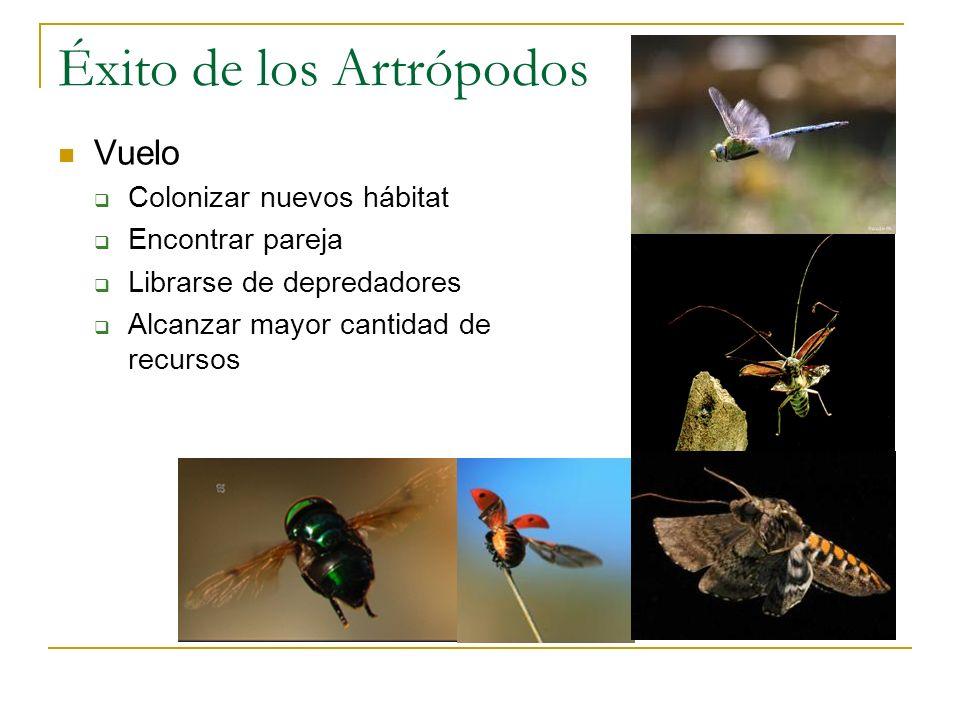 Éxito de los Artrópodos Vuelo Colonizar nuevos hábitat Encontrar pareja Librarse de depredadores Alcanzar mayor cantidad de recursos