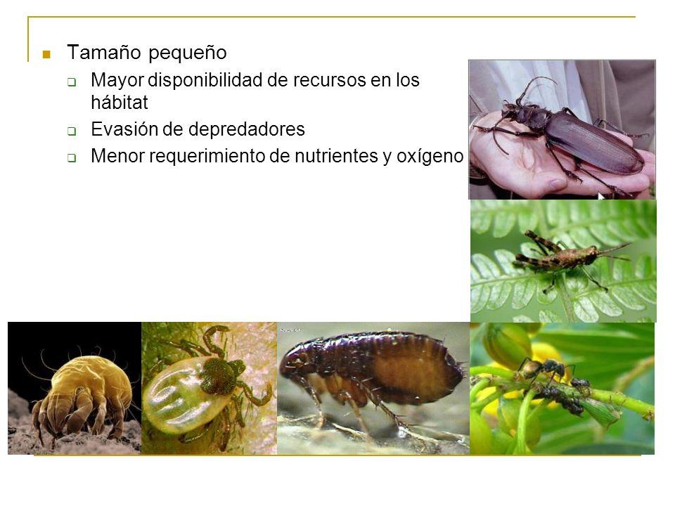 Tamaño pequeño Mayor disponibilidad de recursos en los hábitat Evasión de depredadores Menor requerimiento de nutrientes y oxígeno