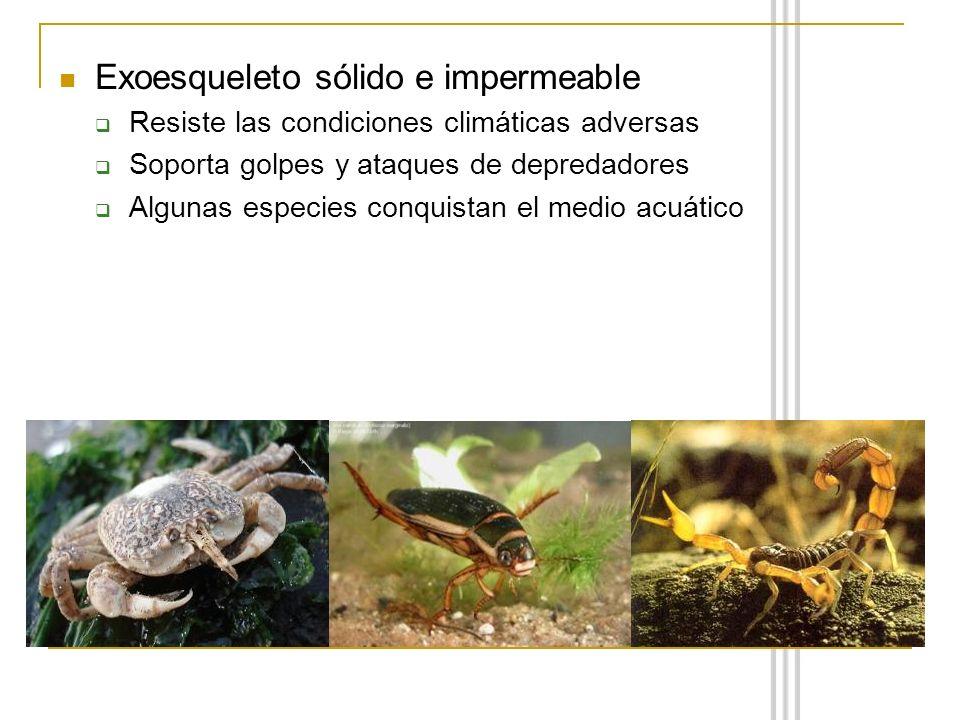 Exoesqueleto sólido e impermeable Resiste las condiciones climáticas adversas Soporta golpes y ataques de depredadores Algunas especies conquistan el