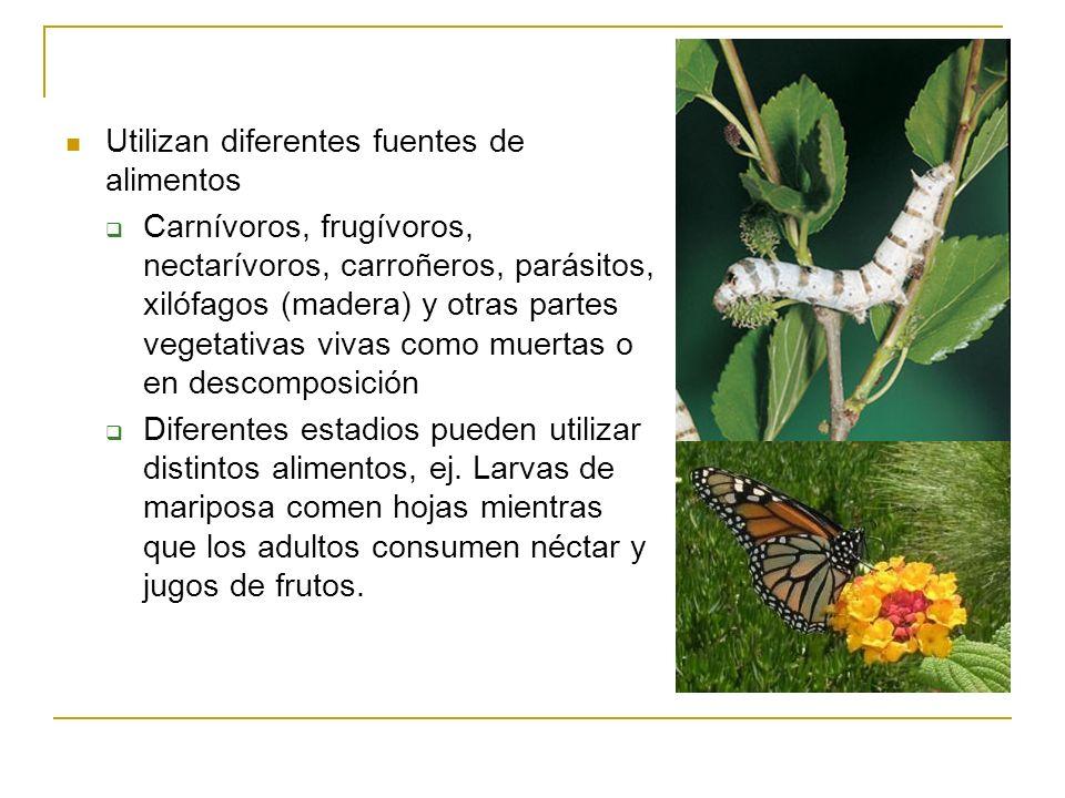 Utilizan diferentes fuentes de alimentos Carnívoros, frugívoros, nectarívoros, carroñeros, parásitos, xilófagos (madera) y otras partes vegetativas vi