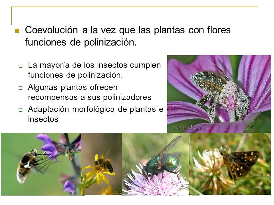 La mayoría de los insectos cumplen funciones de polinización. Algunas plantas ofrecen recompensas a sus polinizadores Adaptación morfológica de planta