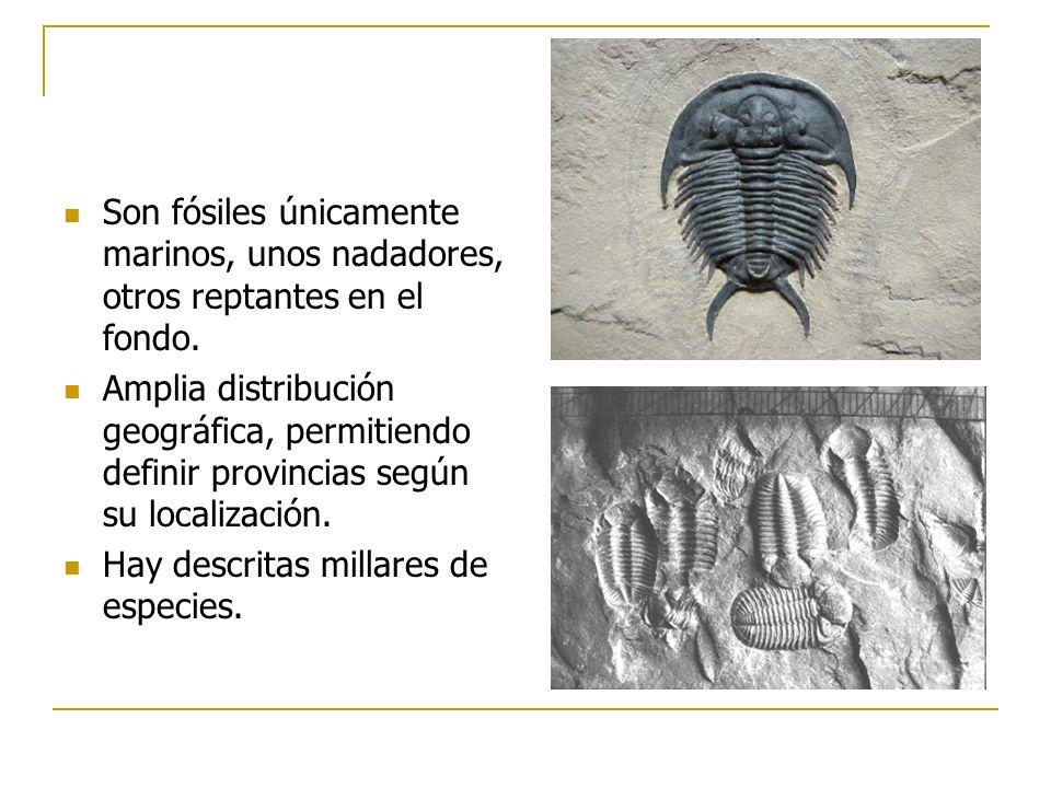 Son fósiles únicamente marinos, unos nadadores, otros reptantes en el fondo. Amplia distribución geográfica, permitiendo definir provincias según su l