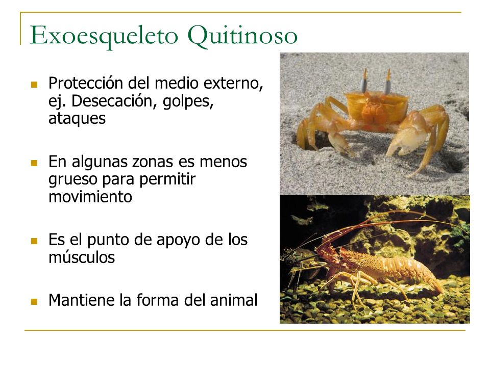 Orden Diptera (Dipteros) Moscas y zancudos Grupo grande y diverso, más de 90.000 especies descritas.