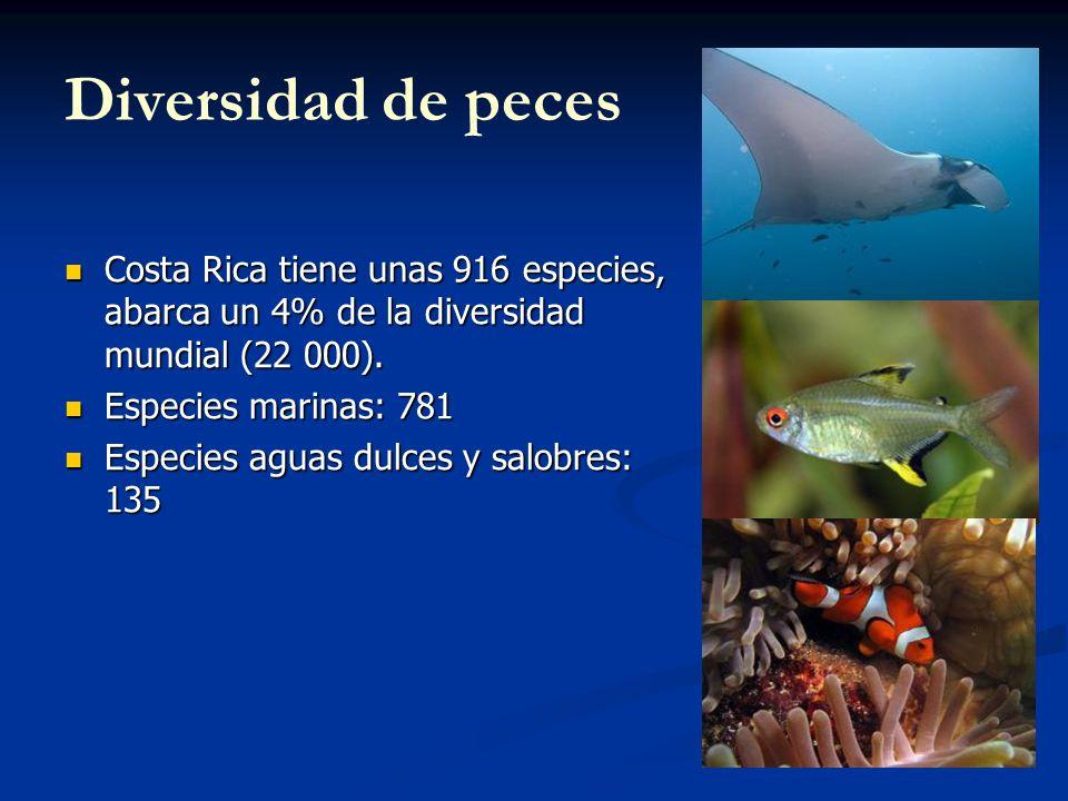 Diversidad de peces Costa Rica tiene unas 916 especies, abarca un 4% de la diversidad mundial (22 000). Costa Rica tiene unas 916 especies, abarca un