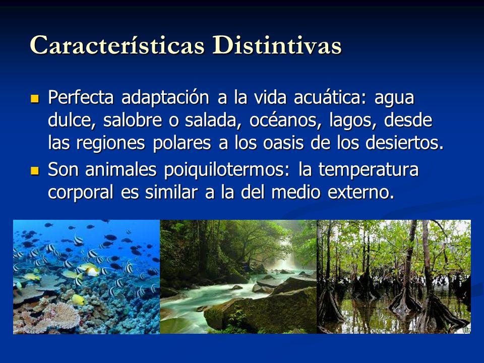 Características Distintivas Perfecta adaptación a la vida acuática: agua dulce, salobre o salada, océanos, lagos, desde las regiones polares a los oasis de los desiertos.