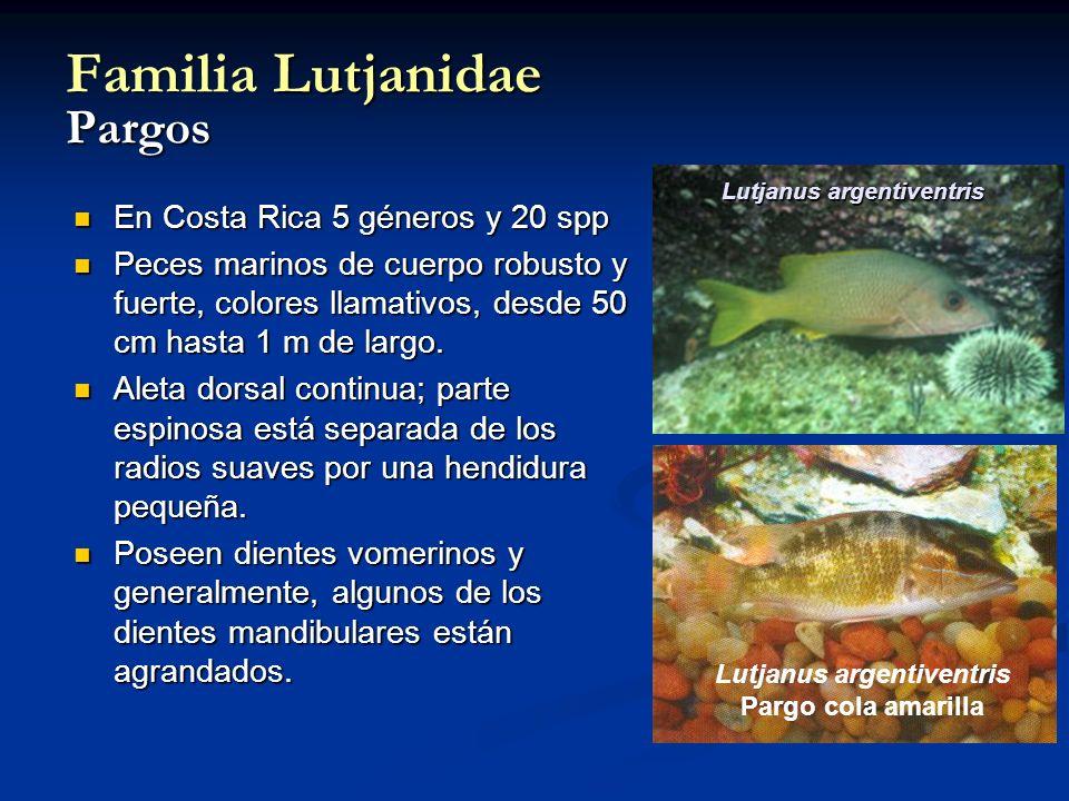 Lutjanus argentiventris Pargo cola amarilla Familia Lutjanidae Pargos En Costa Rica 5 géneros y 20 spp En Costa Rica 5 géneros y 20 spp Peces marinos de cuerpo robusto y fuerte, colores llamativos, desde 50 cm hasta 1 m de largo.