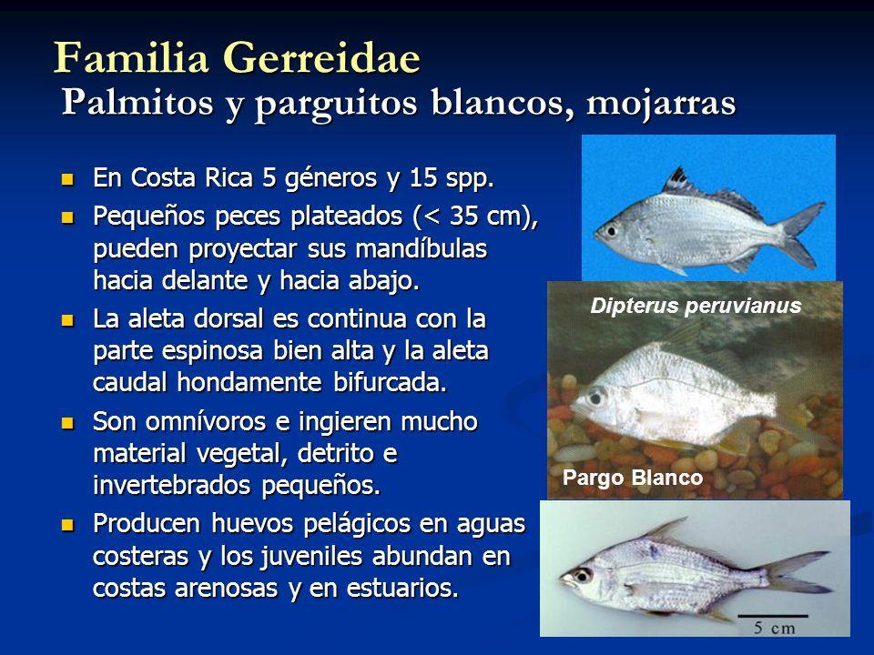 En Costa Rica 5 géneros y 15 spp.En Costa Rica 5 géneros y 15 spp.