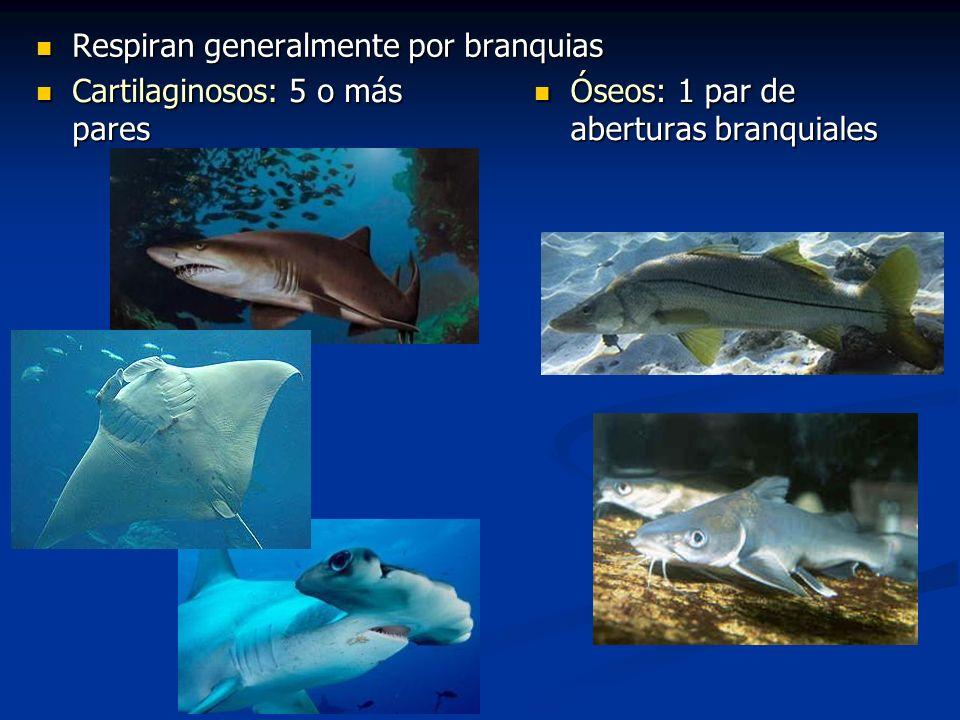 Peces de Aguas Continentales de Costa Rica