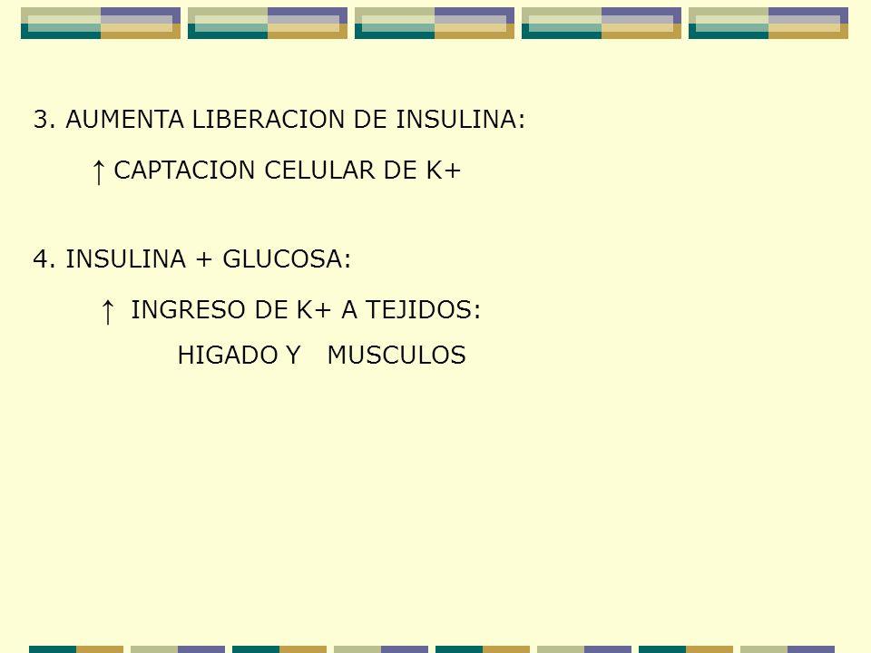 3. AUMENTA LIBERACION DE INSULINA: CAPTACION CELULAR DE K+ 4. INSULINA + GLUCOSA: INGRESO DE K+ A TEJIDOS: HIGADO Y MUSCULOS