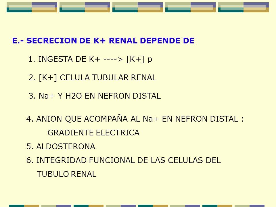 E.- SECRECION DE K+ RENAL DEPENDE DE 1. INGESTA DE K+ ----> [K+] p 2. [K+] CELULA TUBULAR RENAL 3. Na+ Y H2O EN NEFRON DISTAL 4. ANION QUE ACOMPAÑA AL