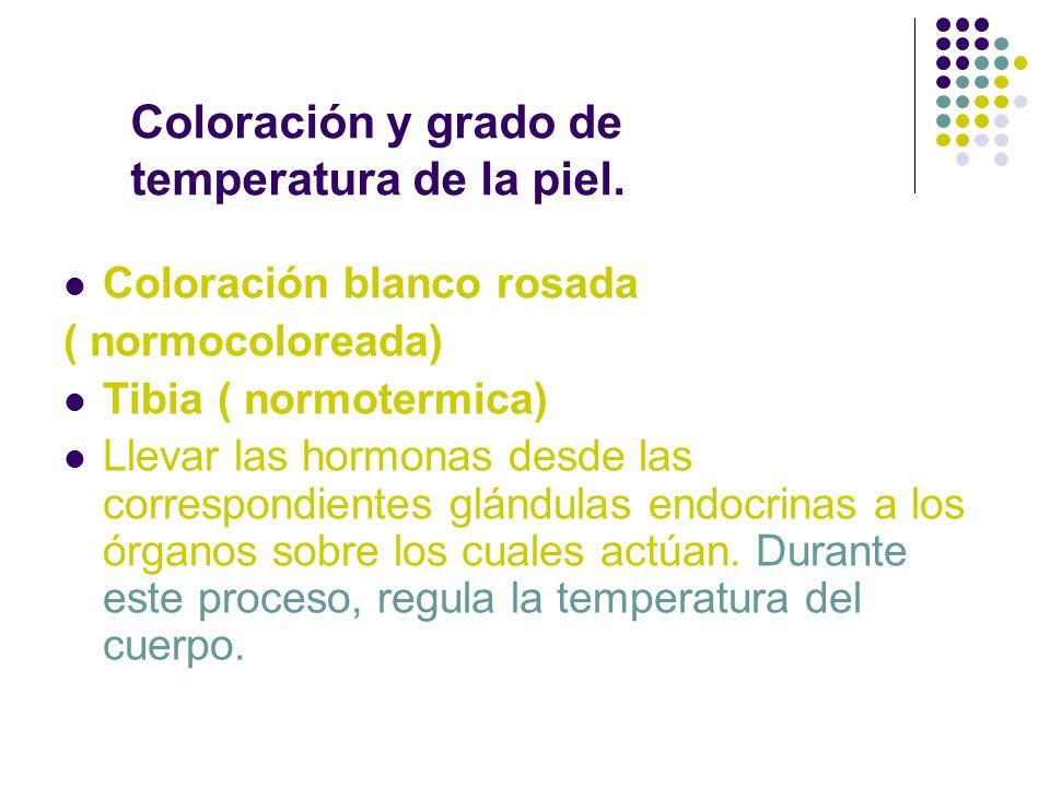 Coloración blanco rosada ( normocoloreada) Tibia ( normotermica) Llevar las hormonas desde las correspondientes glándulas endocrinas a los órganos sob