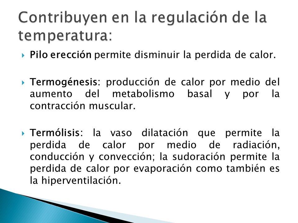 Pilo erección permite disminuir la perdida de calor. Termogénesis: producción de calor por medio del aumento del metabolismo basal y por la contracció