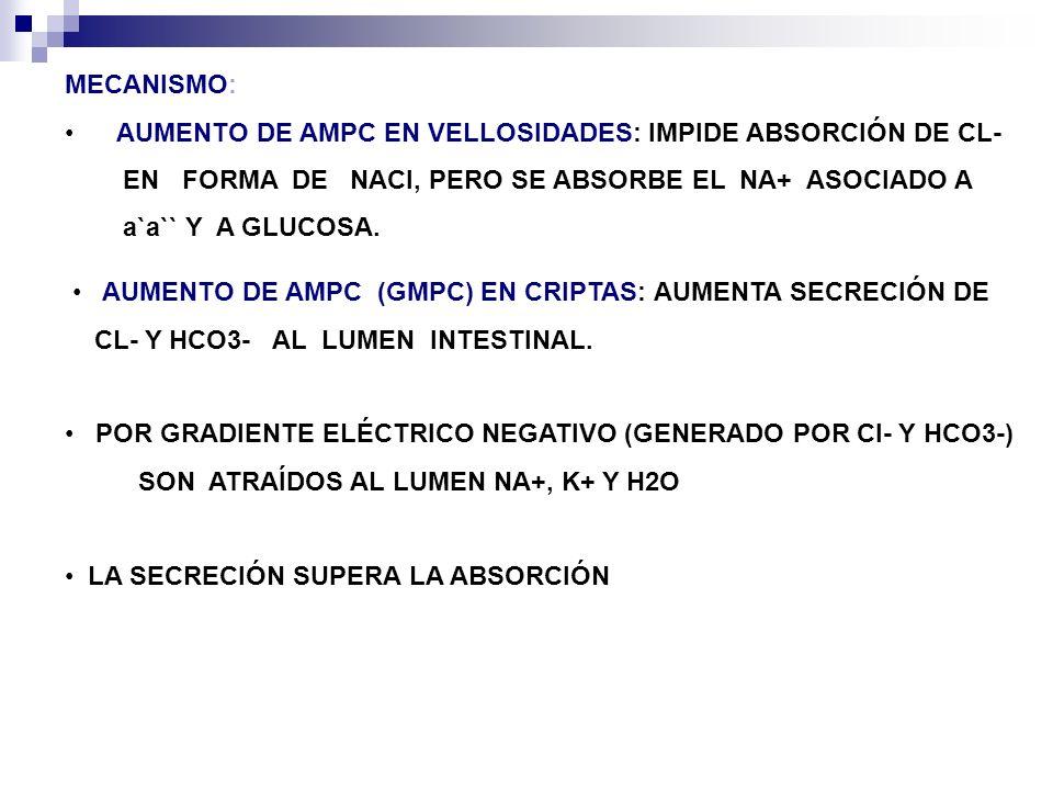 AUMENTO DE AMPC (GMPC) EN CRIPTAS: AUMENTA SECRECIÓN DE CL- Y HCO3- AL LUMEN INTESTINAL. MECANISMO: AUMENTO DE AMPC EN VELLOSIDADES: IMPIDE ABSORCIÓN