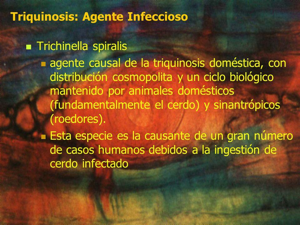 Triquinosis Infección parasitaria endémica producida por nematodos del género Trichinella Transmitida por carnivorismo y caracterizada por un síndrome