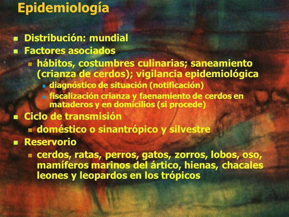 Sintomatología: Periodo de incubación. ( 8 a 15 días) Periodo de invasión. Corresponde a fase intestinal e invasión de los tejidos vía sanguínea 2/3: