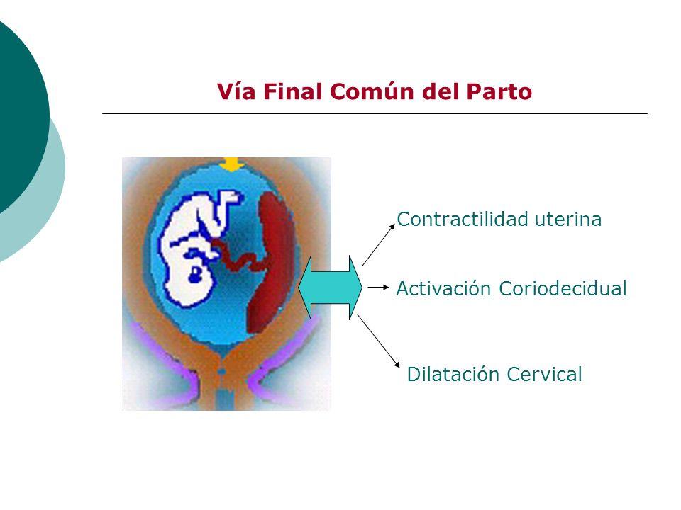 Vía Final Común del Parto Contractilidad uterina Activación Coriodecidual Dilatación Cervical