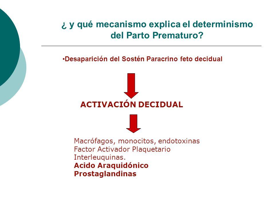 ¿ y qué mecanismo explica el determinismo del Parto Prematuro? Desaparición del Sostén Paracrino feto decidual ACTIVACIÓN DECIDUAL Macrófagos, monocit