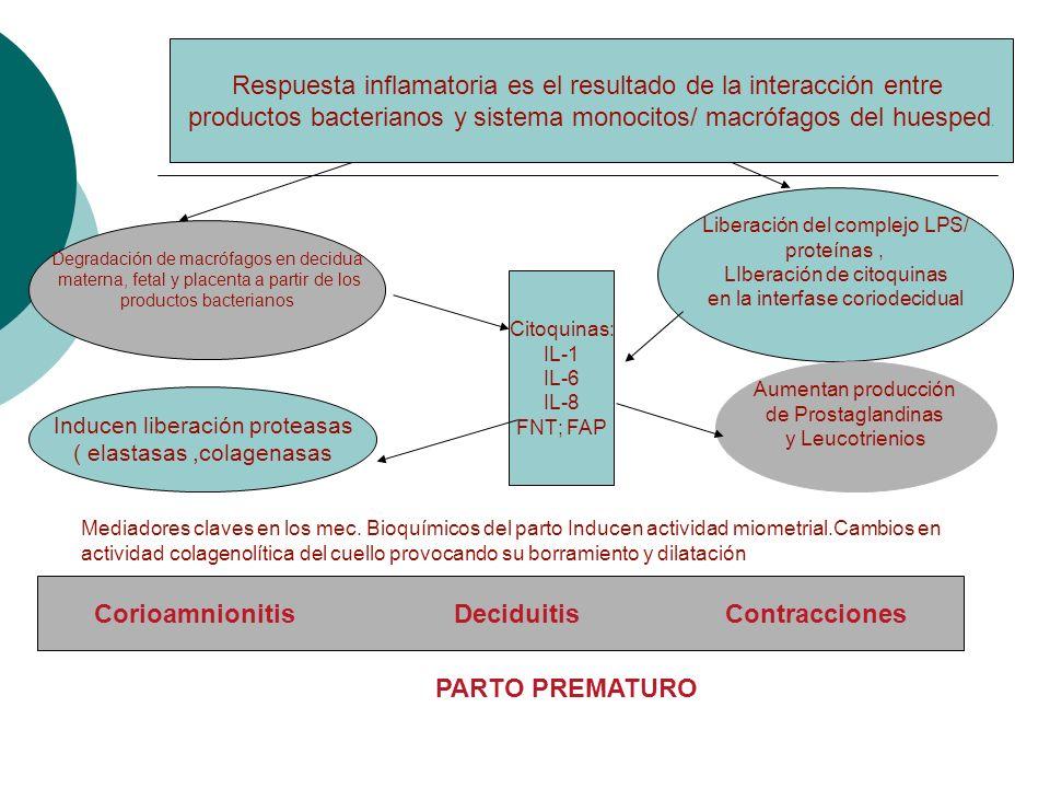 Respuesta inflamatoria es el resultado de la interacción entre productos bacterianos y sistema monocitos/ macrófagos del huesped. Degradación de macró