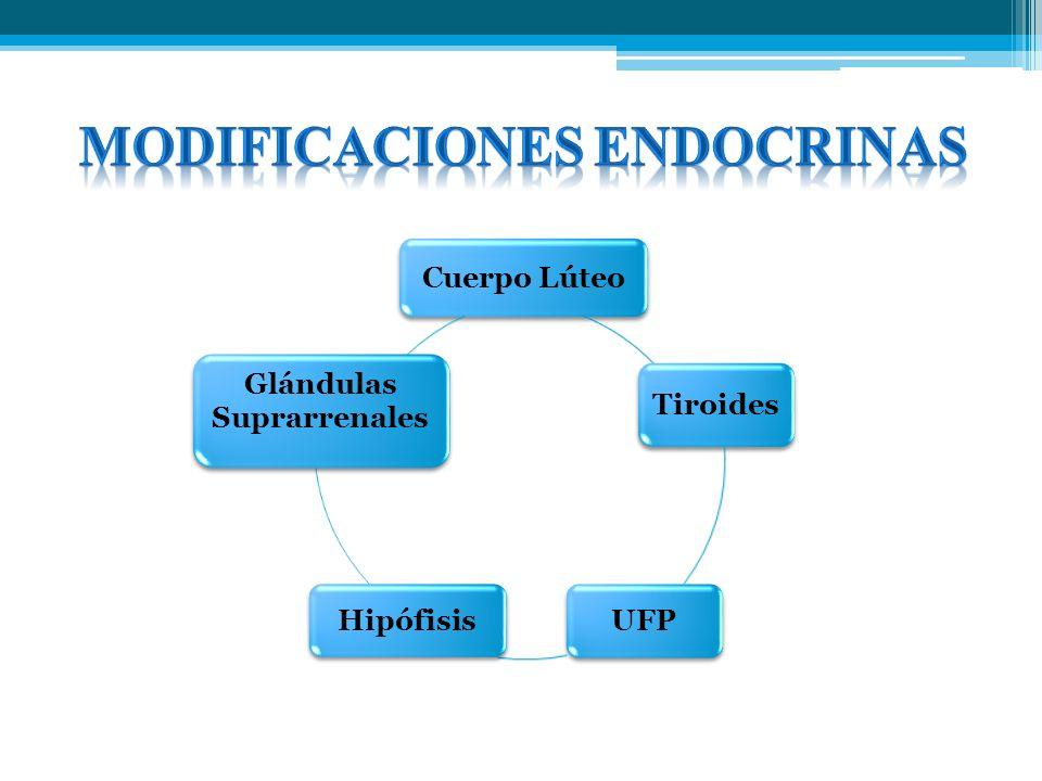 Cuerpo Lúteo Tiroides UFPHipófisis Glándulas Suprarrenales