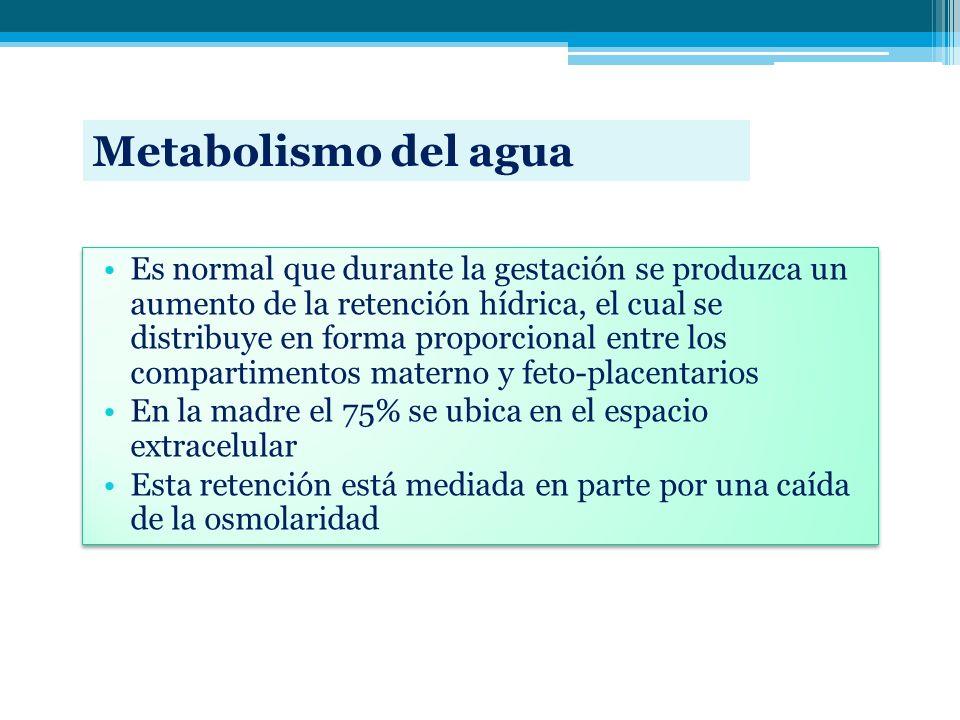 Metabolismo del agua Es normal que durante la gestación se produzca un aumento de la retención hídrica, el cual se distribuye en forma proporcional en