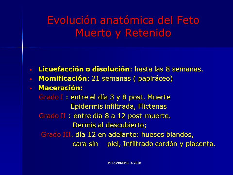 M.T.CARDEMIL J.-2010 Evolución anatómica del Feto Muerto y Retenido Licuefacción o disolución: hasta las 8 semanas. Licuefacción o disolución: hasta l