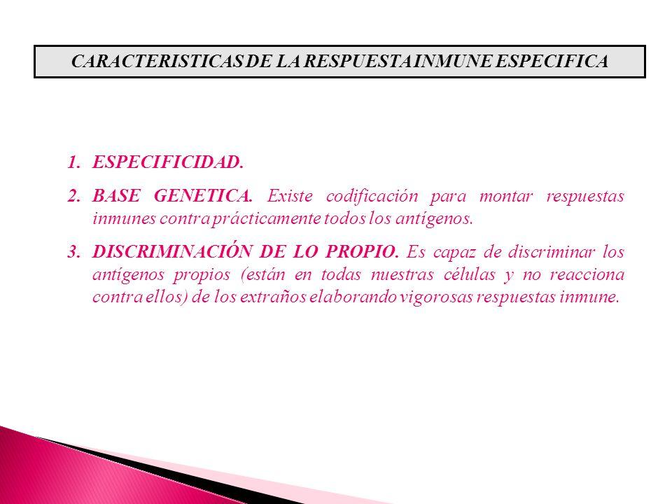 CARACTERISTICAS DE LA RESPUESTA INMUNE ESPECIFICA 1.ESPECIFICIDAD. 2.BASE GENETICA. Existe codificación para montar respuestas inmunes contra práctica
