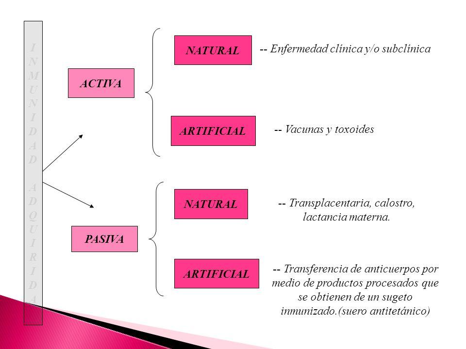 ACTIVA PASIVA INMUNIDADADQUIRIDAINMUNIDADADQUIRIDA NATURAL ARTIFICIAL NATURAL ARTIFICIAL -- Enfermedad clínica y/o subclínica -- Vacunas y toxoides --