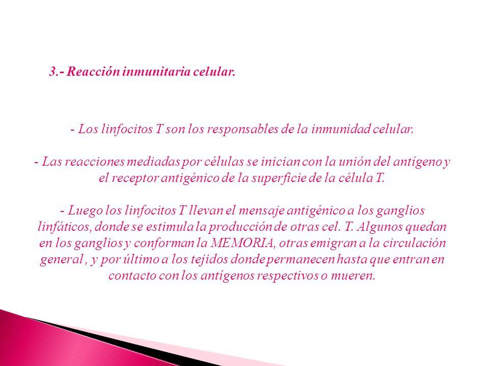 3.- Reacción inmunitaria celular. - Los linfocitos T son los responsables de la inmunidad celular. - Las reacciones mediadas por células se inician co