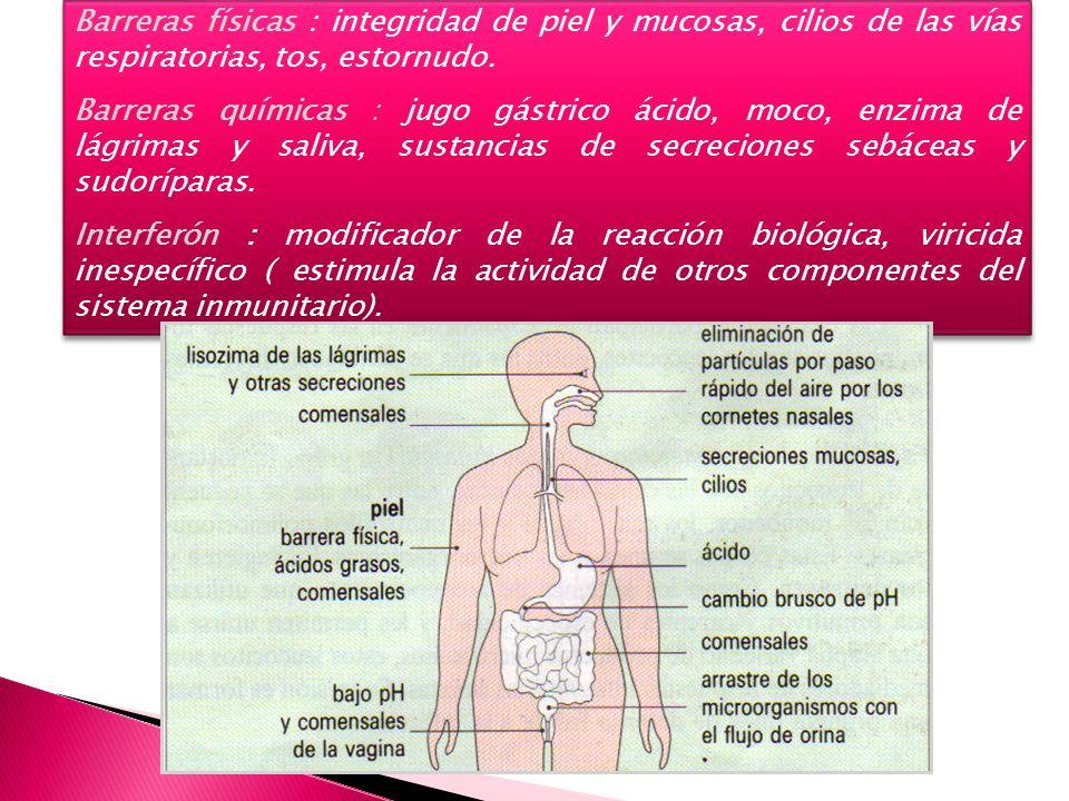 Barreras físicas : integridad de piel y mucosas, cilios de las vías respiratorias, tos, estornudo. Barreras químicas : jugo gástrico ácido, moco, enzi
