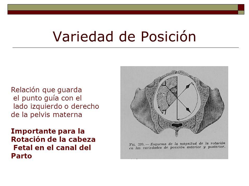 Variedad de Posición Relación que guarda el punto guía con el lado izquierdo o derecho de la pelvis materna Importante para la Rotación de la cabeza F