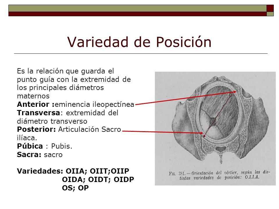 Variedad de Posición Es la relación que guarda el punto guía con la extremidad de los principales diámetros maternos Anterior :eminencia ileopectínea