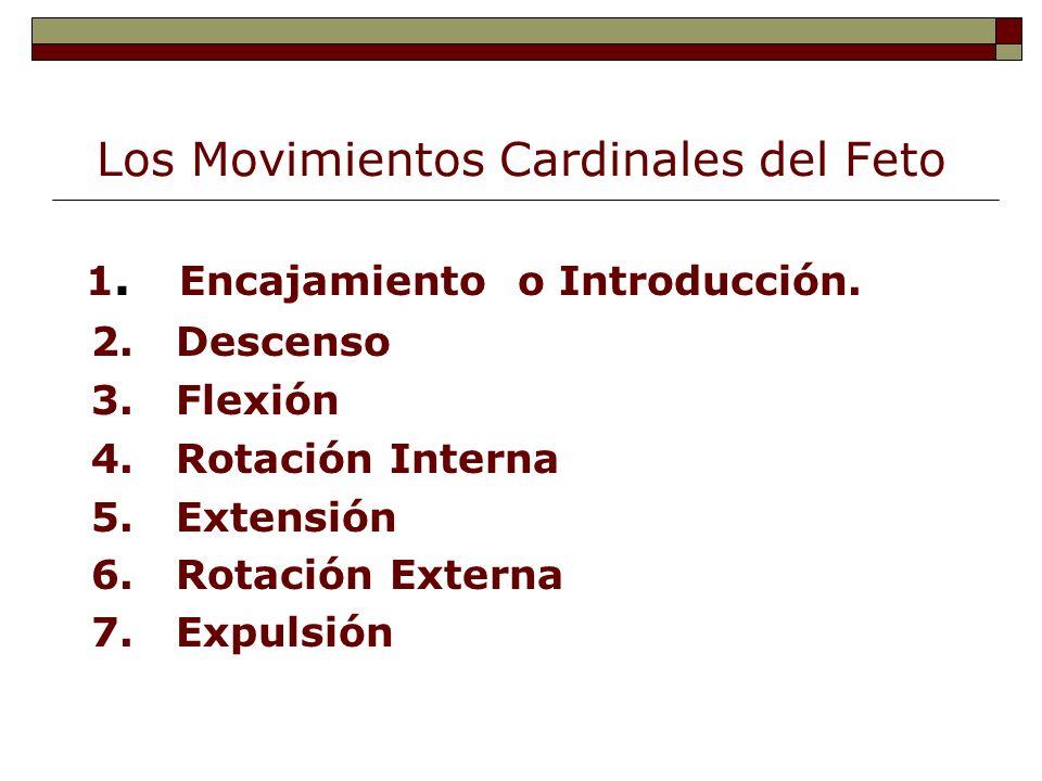 Los Movimientos Cardinales del Feto 1. Encajamiento o Introducción. 2. Descenso 3. Flexión 4. Rotación Interna 5. Extensión 6. Rotación Externa 7. Exp