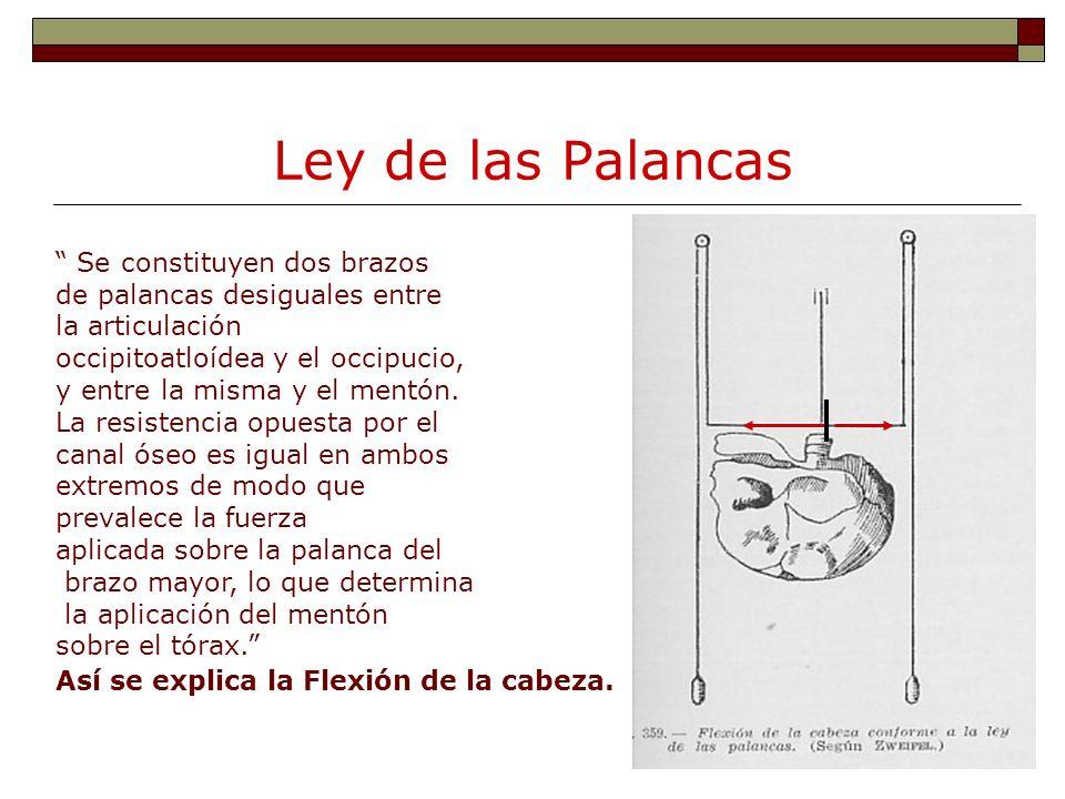 Ley de las Palancas Se constituyen dos brazos de palancas desiguales entre la articulación occipitoatloídea y el occipucio, y entre la misma y el ment