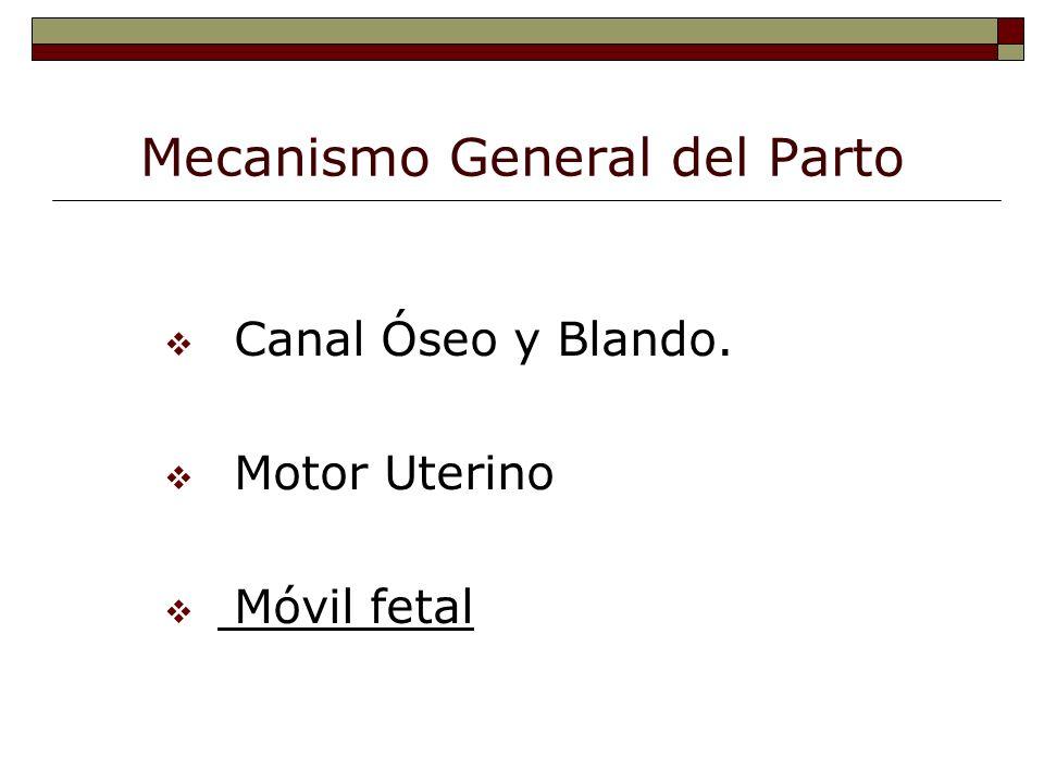 El Móvil Fetal v Segmentos Corporales.v Diámetros Anteroposteriores.