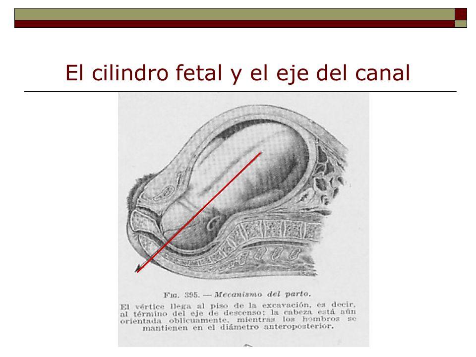 El cilindro fetal y el eje del canal