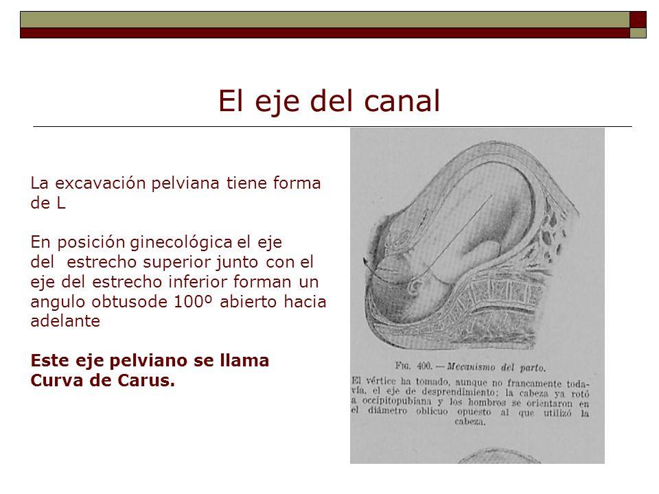 El eje del canal La excavación pelviana tiene forma de L En posición ginecológica el eje del estrecho superior junto con el eje del estrecho inferior