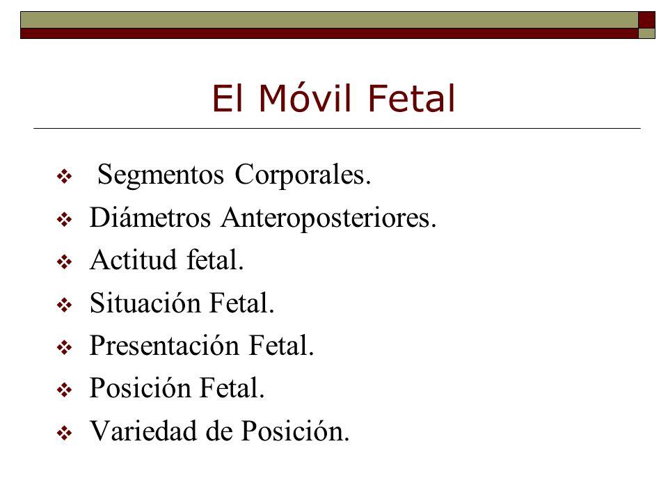 El Móvil Fetal v Segmentos Corporales. v Diámetros Anteroposteriores. v Actitud fetal. v Situación Fetal. v Presentación Fetal. v Posición Fetal. v Va