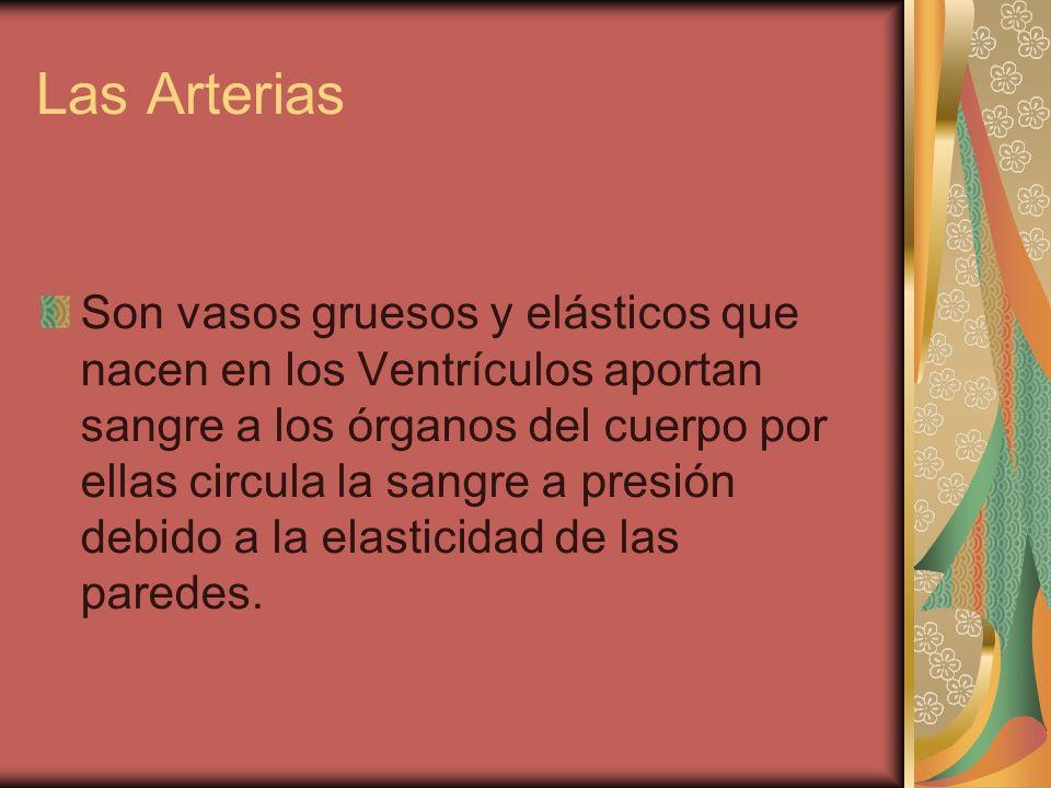 Las Arterias Son vasos gruesos y elásticos que nacen en los Ventrículos aportan sangre a los órganos del cuerpo por ellas circula la sangre a presión
