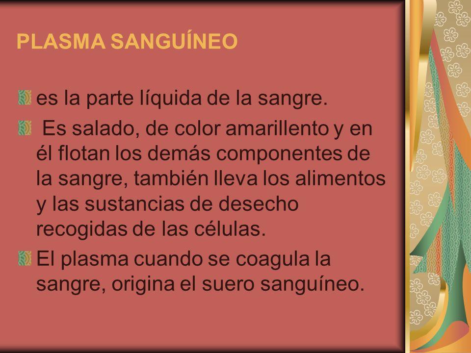 PLASMA SANGUÍNEO es la parte líquida de la sangre. Es salado, de color amarillento y en él flotan los demás componentes de la sangre, también lleva lo