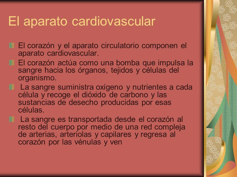 El aparato cardiovascular El corazón y el aparato circulatorio componen el aparato cardiovascular. El corazón actúa como una bomba que impulsa la sang