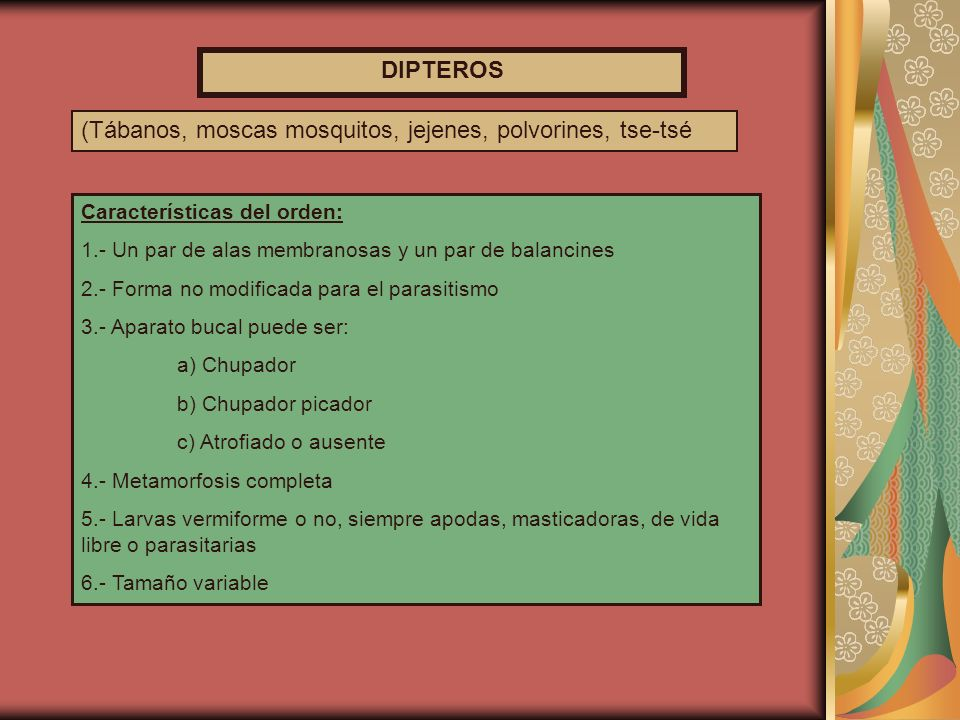 LARVA DE DERMATOBIA HOMINIS LARVAS DE MUSCA DOMESTICA